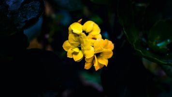 Бесплатные фото цветок,цветы,природа,растения,рыжих