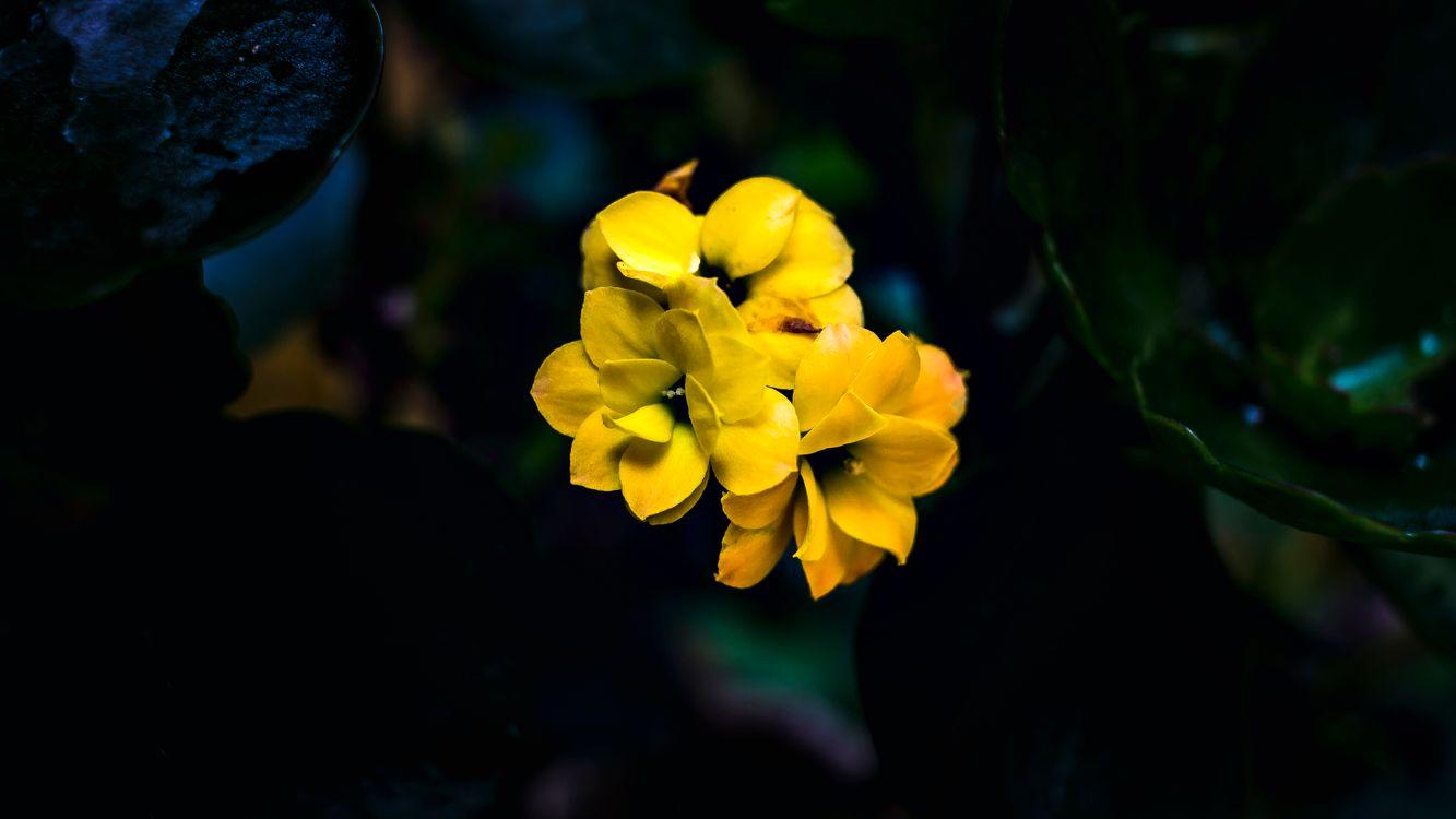 Фото бесплатно цветок, цветы, природа, растения, рыжих, цветы