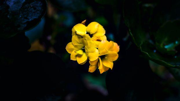 Photo free flower, flowers, nature