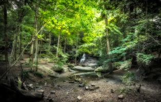 Заставки Honey Run Park, водопад, лес