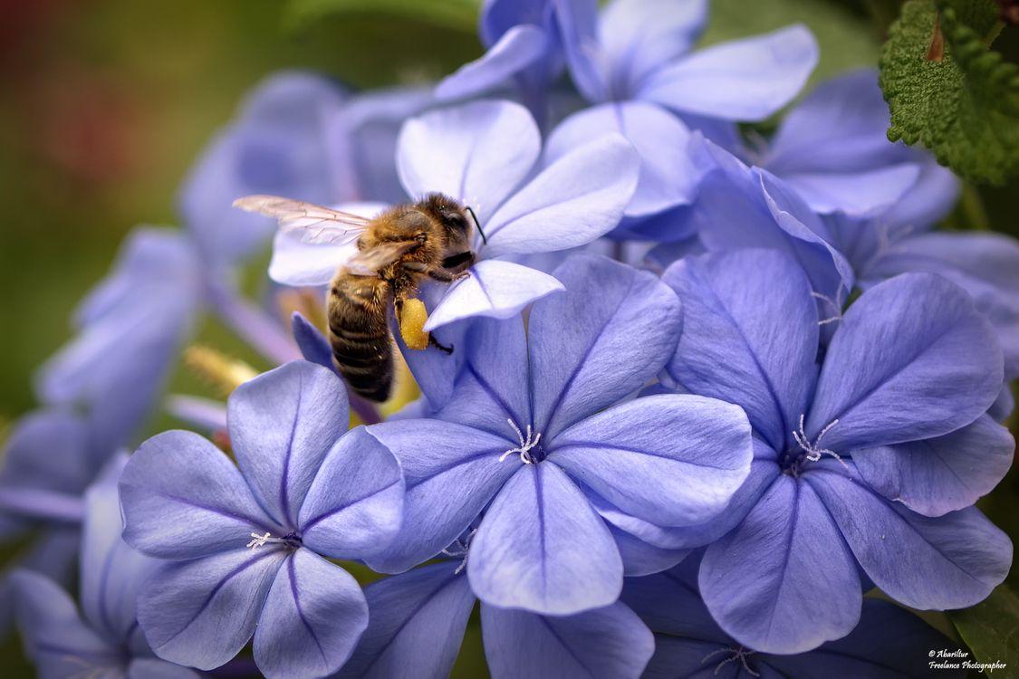 Фото бесплатно Оса, красиво, цветок - на рабочий стол