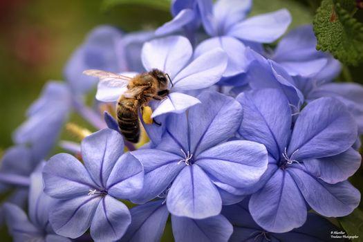 Фото бесплатно Оса, красиво, цветок
