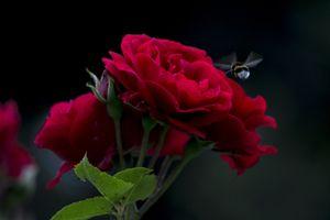 Фото бесплатно цветы, цветок, цветочный