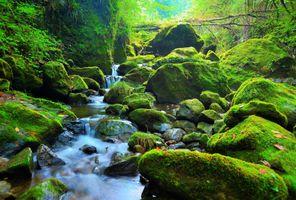 Фото бесплатно зелёный, лес, камни