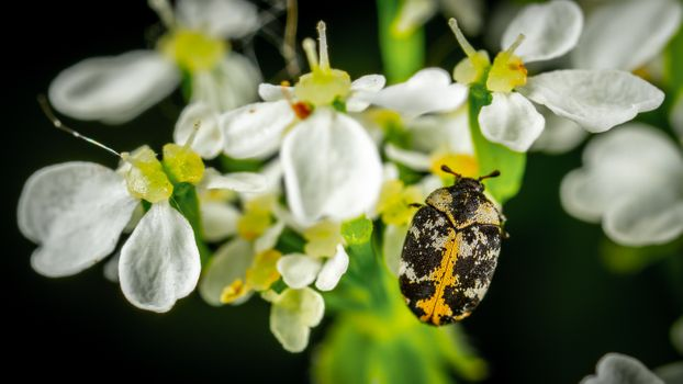 Бесплатные фото цветение,цвести,флора,цветы,сад,рост,насекомое,немного,макрос,лепестки