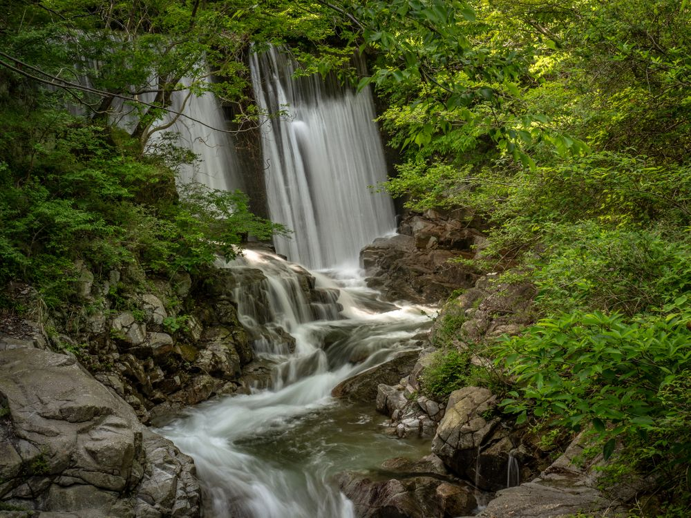 Фото бесплатно лес, деревья, скалы, водопад, природа, пейзаж, природа