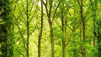 Бесплатные фото зеленый,лес,дневное время,деревьями,брюссель,дерево,природный ландшафт