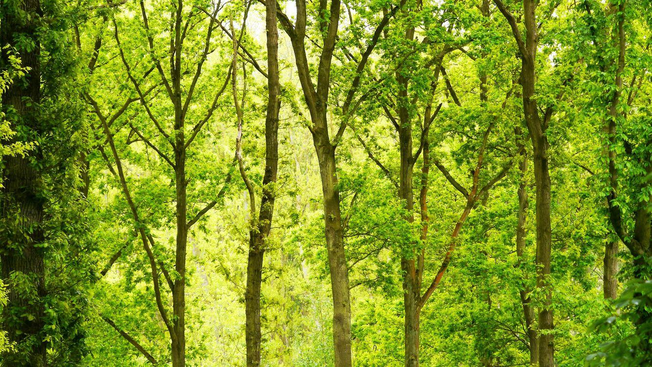 Фото бесплатно зеленый, лес, дневное время - на рабочий стол