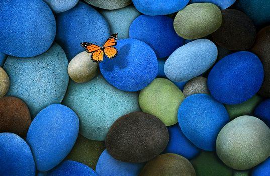 Photo free blue, bright colour, brown