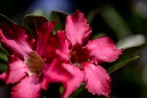 Photo free petal, plant, flowering plant