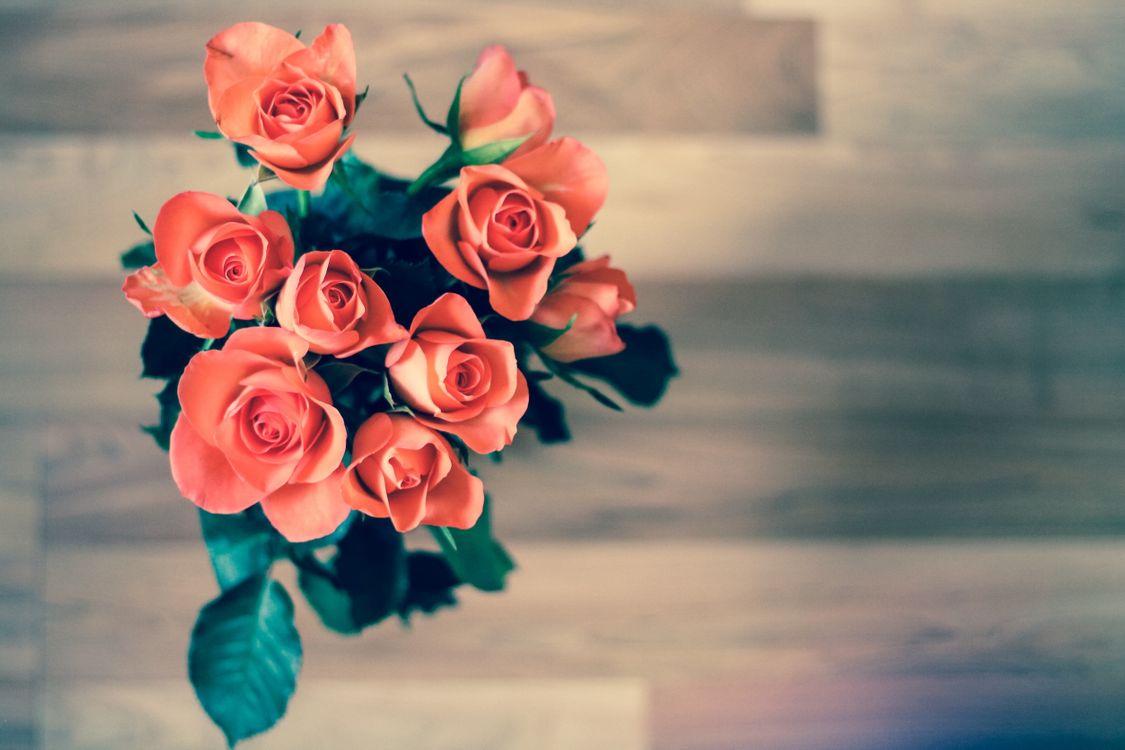 Букет алых роз · бесплатное фото