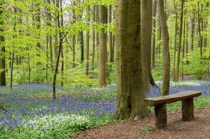 Фото бесплатно лес, деревья, цветы, лавочка, скамейка, природа, пейзаж