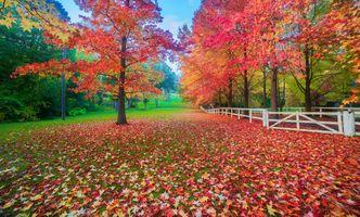 Фото бесплатно осень, парк, поляна
