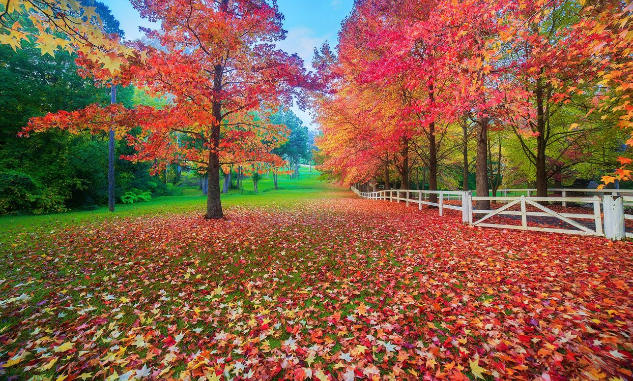 Фото бесплатно осень, парк, поляна - на рабочий стол