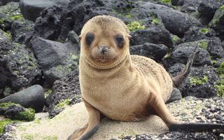 Wildlife in Galapagos Islands