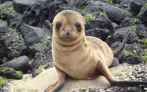 Wildlife in Galapagos Islands · бесплатное фото