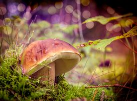 Бесплатные фото белый гриб,боровик,Steinpilz,макро,природа,мох
