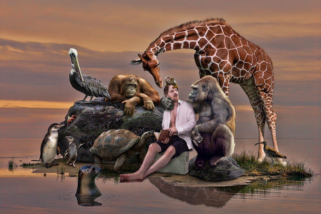 Фото бесплатно море, остров, парень, животные, горилла, орангутанг, жираф - на рабочий стол