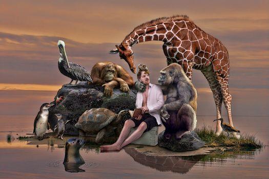 Бесплатные фото море,остров,парень,животные,горилла,орангутанг,жираф,черепаха,ситуация,art