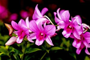 Бесплатные фото орхидея,орхидеи,цветы,цветок,флора
