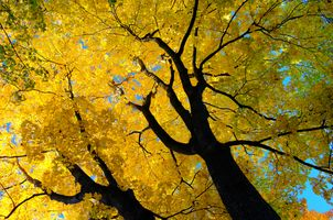 Фото бесплатно осень, осеннее дерево, ветки