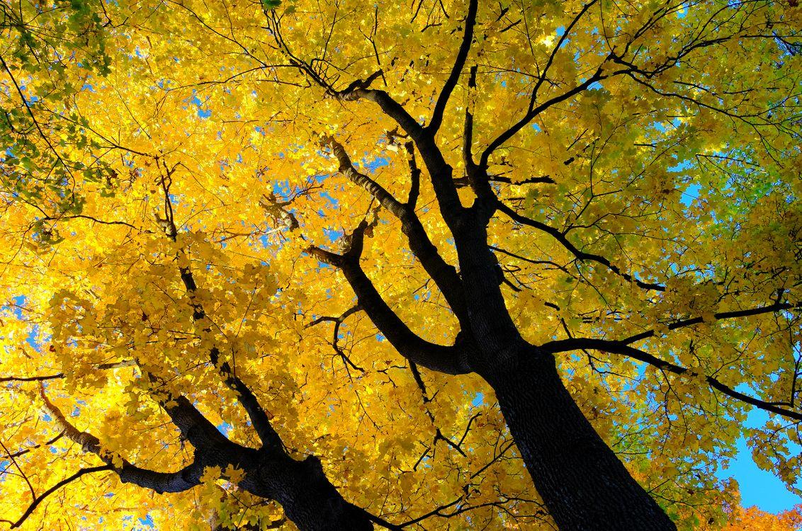 Photo autumn autumn tree branches - free pictures on Fonwall