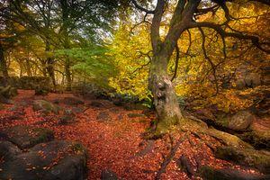 Фото бесплатно лес, осень цвет, парк