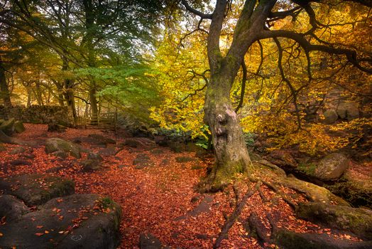 Photo free forest, fall colors, Park