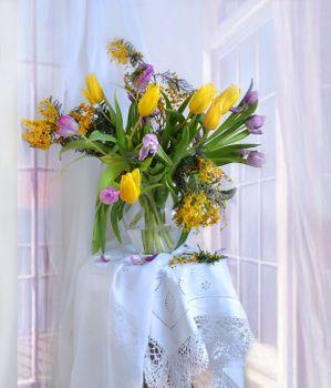 Photo free tulips, flowers, mimosa