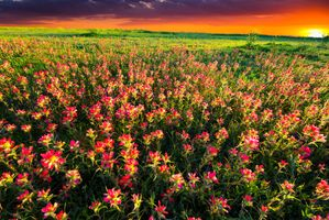 Photo free flowers, blooming, field