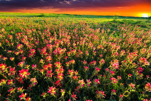 Field of flowers pictures free download