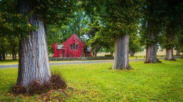 Фото бесплатно Австралия, осень, деревья