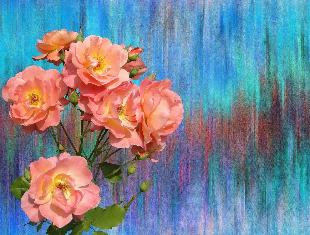 Обои Красивый букет, букет, цветочная композиция, флора, цветы, цветок, цветочный картинки на телефон