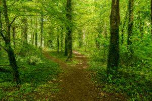 Летний лес и тропинка · бесплатное фото