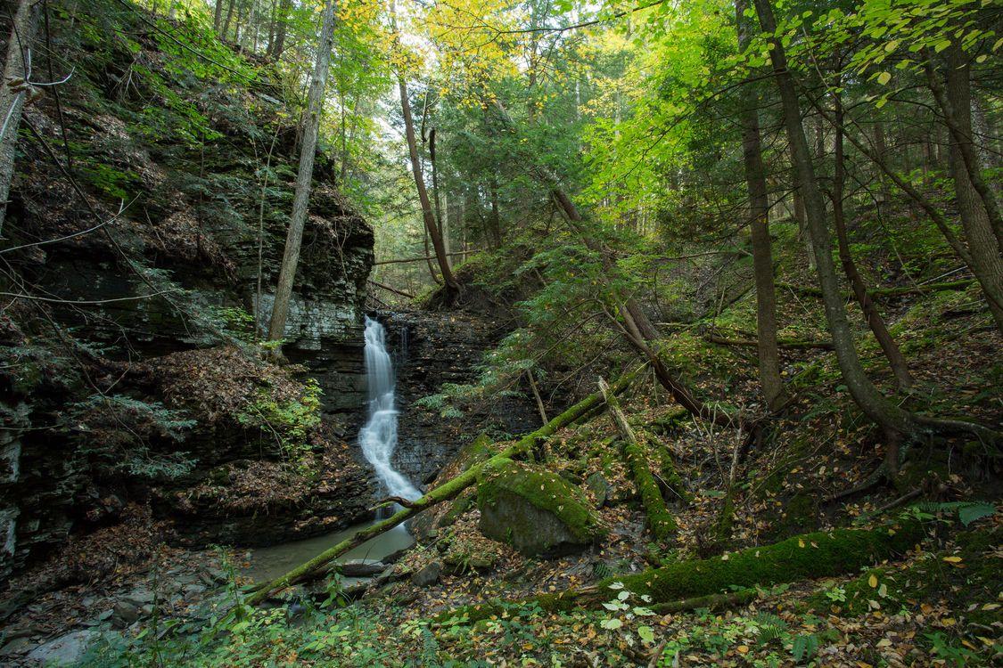 Фото бесплатно лес, деревья, водопад, скалы, природа, пейзаж, пейзажи