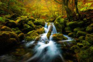 Заставки лес,речка,деревья,камни,ручей,течение,природа