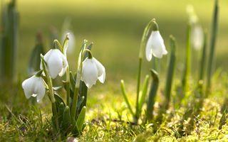 Photo free Snowdrop, spring, spring has come