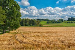 Фото бесплатно поле, колосья, холмы