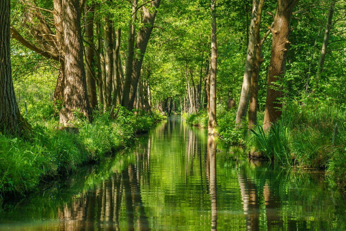 Фото бесплатно лес, река, Spreewald, Brandenburg, Germany - на рабочий стол