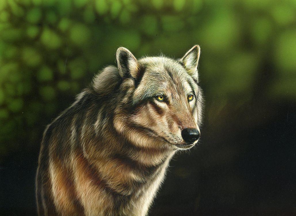 Фото бесплатно волк, хищник, животное, взгляд, art, рендеринг