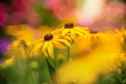Заставки цветочный, цветочная композиция, флора
