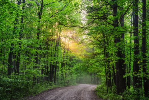 Photo free Dirt Road at Saint Croix State Park, Minnesota, road