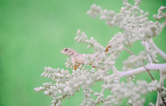 Бесплатные фото портрет,ящерица,милый,прекрасный,счастливый,в живых,естественный,красивая,красоту,жить,фауна,макросъемка