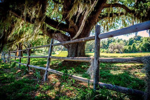Photo free the old oak tree, fence, pasture