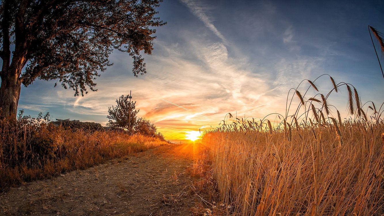 Фото бесплатно закат, поле, колосья, дорога, деревья, солнечные лучи, пейзаж, пейзажи