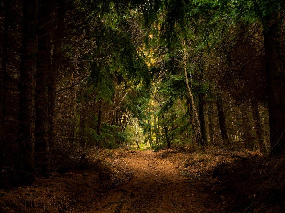 Лес дремучий · бесплатное фото