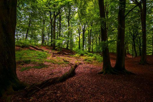 Фото бесплатно лес, пейзаж, на природе