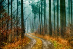 Бесплатные фото осень,лес,деревья,дорога,туман,природа,пейзаж
