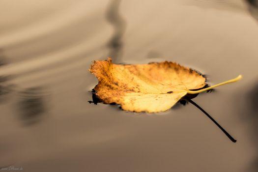 Фото бесплатно вода, опавший лист, листья