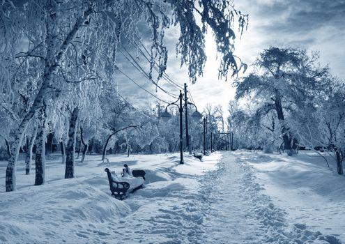 Бесплатные фото зима,парк,сугробы,деревья,фонари,провода,столбы,тропинка,лавочка,пейзаж